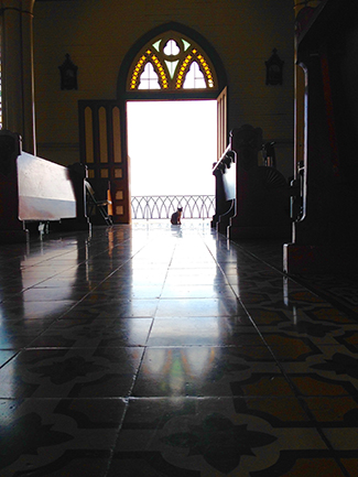2015-2016 Honorable Mention Student Photo Contest by George LoCasico.  Cat at Mass.  Location: Costa Rica